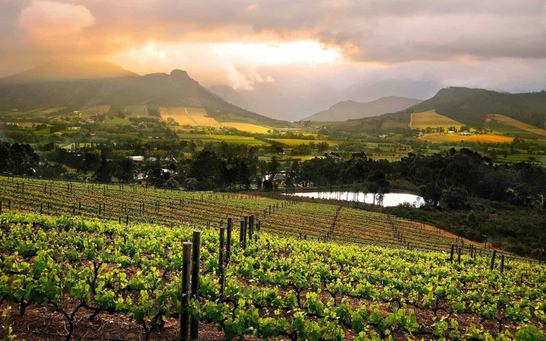 I reiterate my claim that no country, no wine region has been as dynamic, progressive or indeed, as exciting as South Africa….