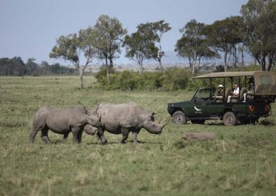 Into Africa Rhino