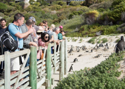 Incentive for a multi national – Cape Town and Safari Cape Point Penguins