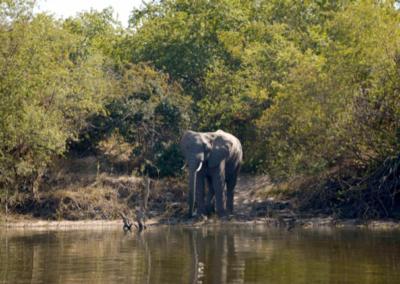 view of elephants from the Zambezi Queen house boat on the Zambezi River